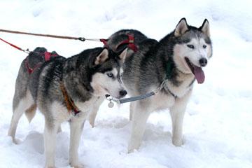 Johtajat Lumi ja Tundra