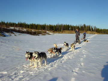 Tundra, Enkeli, Cola, Nata, Tojon ja Scilla,