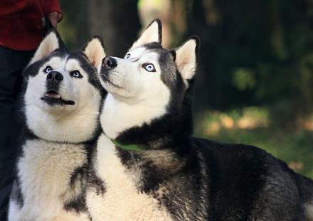 Tytär-Saaga ja äiti-Peppi (K. Dominoa Lumella) keskittyvät yhdessä makupalaan