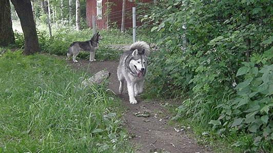 Nata ja Scilla (takana)