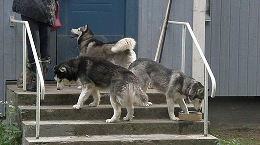 Nata, Hauva ja Scilla, Scilla yrittää uida vesikupissa
