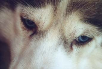Ikää ja viisautta - 11-vuotiaan Rustyn silmät