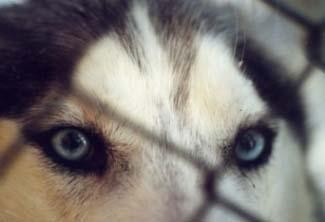 Sen silmät erottivat pienen liikkeen, aivan vähäisen, jossain kaukaisuudessa. (Tundra)