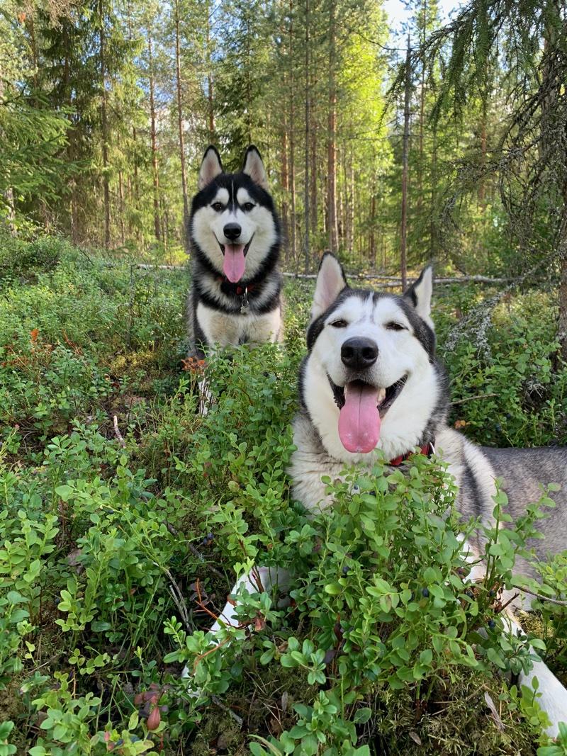 Vapaat ja onnelliset Tundra ja Havu metsässä