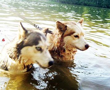 Loch Nessin pikku hirviöt, Scilla ja Mokka