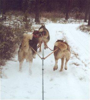 ...lumi vain pöllysi alamäessä vauhdin kiihtyessä nopeammaksi ja nopeammaksi...