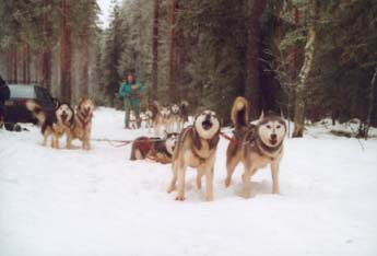 Lähtötunnelmia. 1. Valjakko (Enkeli, Lumi, Tojon, Rosso ja Panda). 2. Valjakko (Tundra, Sala & Mila)