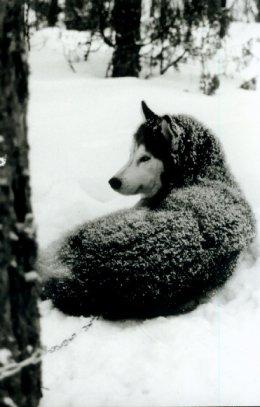 Arktisuutta parhaimmillaan - luminen Rumba
