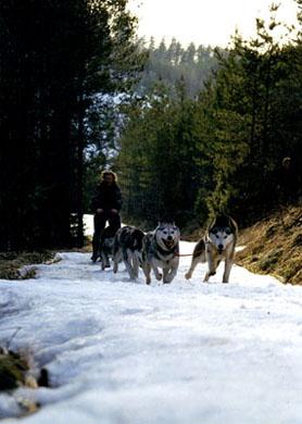 Tundra & Enkeli vieri vieressä vauhdikkaasti johdossa